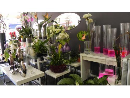 Flores y plantas Bonsai Floristas