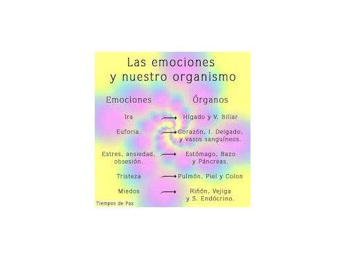 emociones y los organos correspondientes