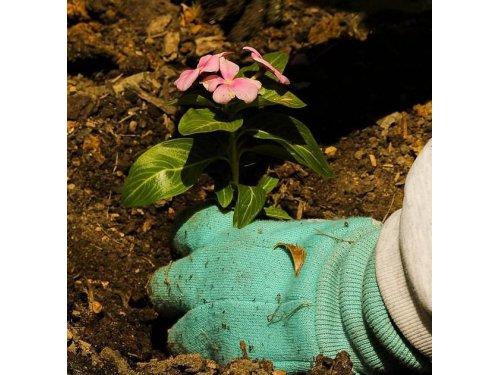 Jardines David Pindado