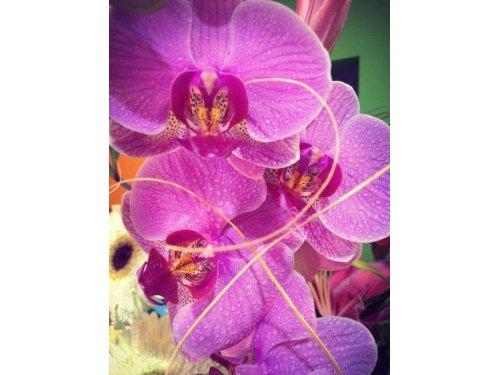 Aromas en Flor