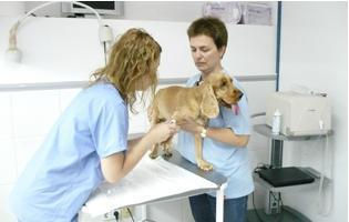 Hospital Veterinari Desvern